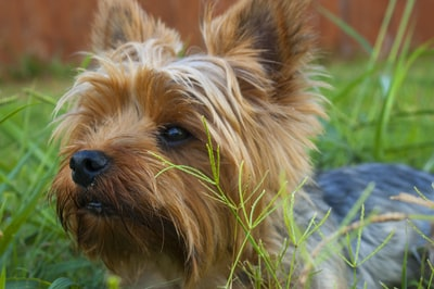 What do dog insurance policies cover?